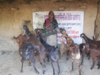 goat rearing leads to enhanced income